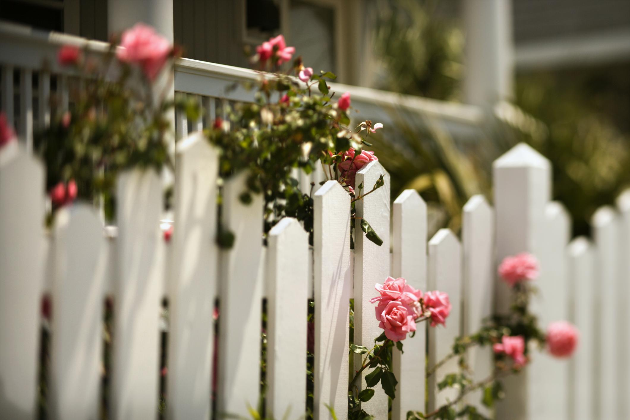white wooden picket fence close up picture